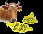 Современные ушные бирки для животных КРС и МРС в Красноярске