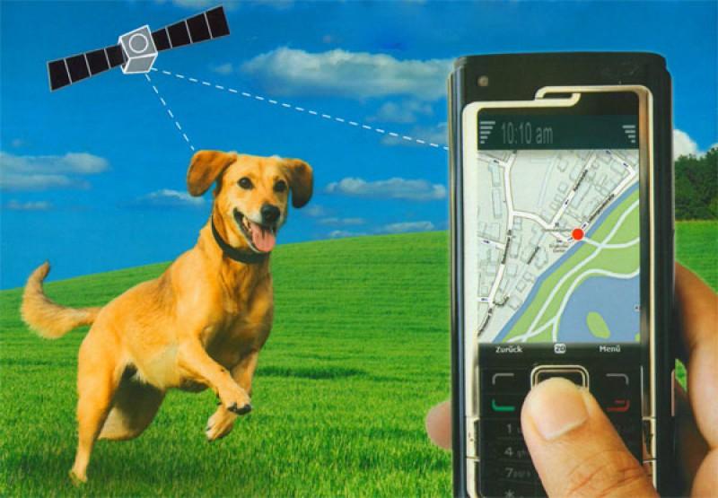 Как работает GPS трекер для животных
