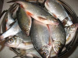 Хладоэлементы гелевые для рыбалки