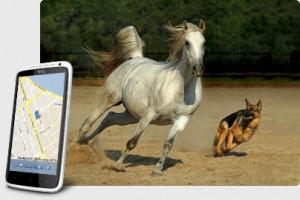 Поисковый GPS + ГЛОНАСС Маяк TRANSCOM Т-15F Контроль за домашними животными